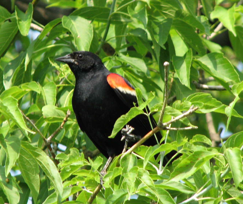 Black Bird Cafe